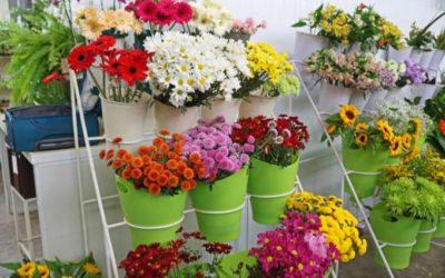 Dono da Flores Online cria negócio de olho no pequeno lojista do interior